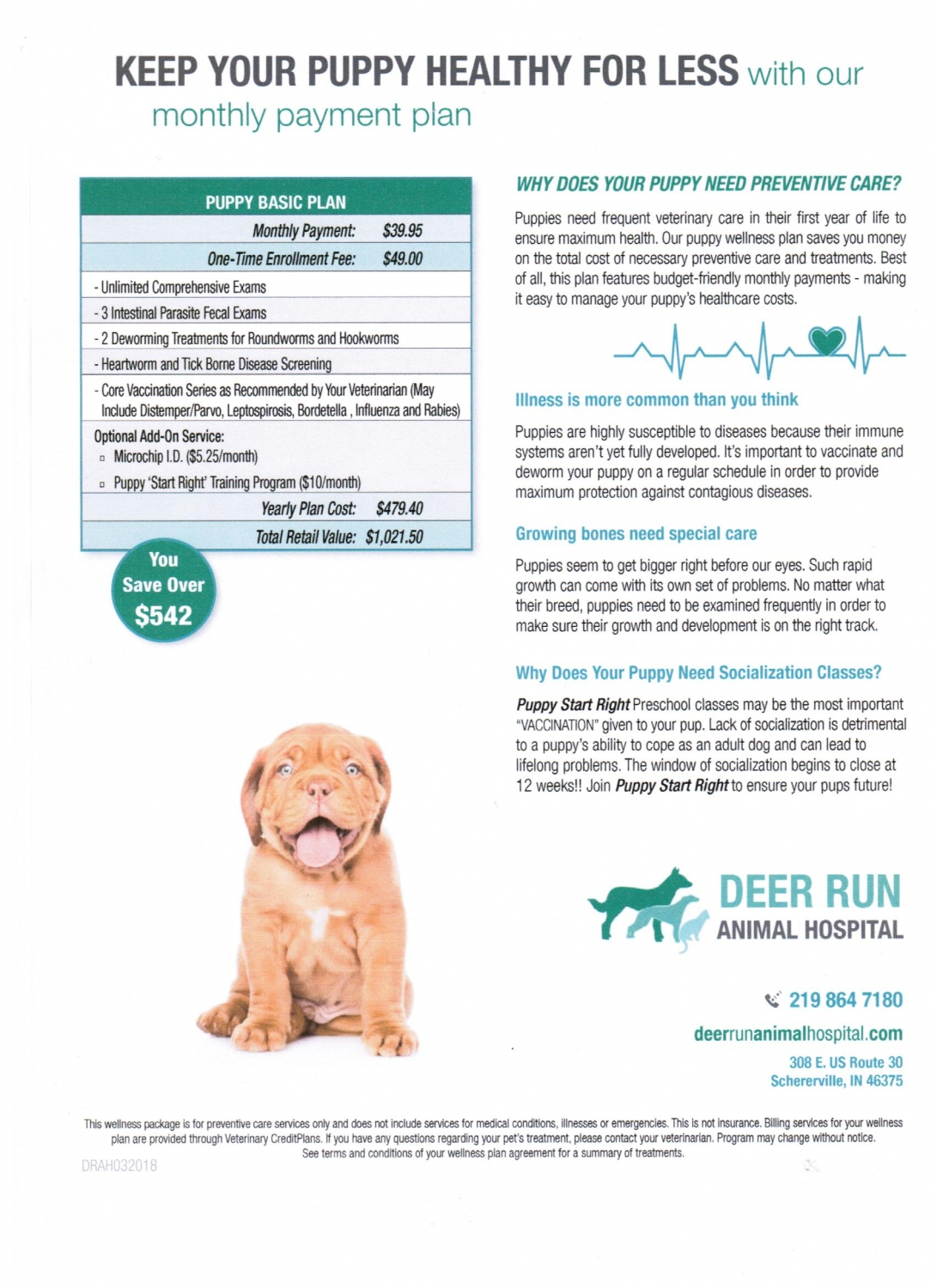 Wellness Dogs Vet In Schererville Deer Run Animal Hospital